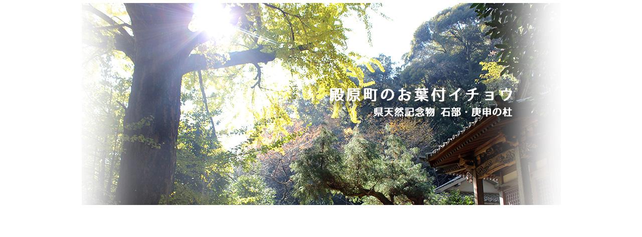 殿原町のお葉付きイチョウ 県天然記念物 庚申の杜